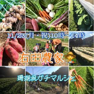 たつの市の有機栽培のオーガニック野菜販売🥬🍠