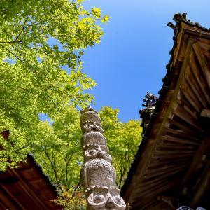 新緑の光明寺