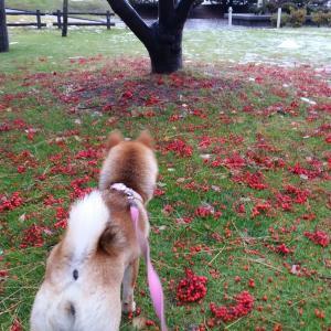 北海道の洞爺湖、乃の風リゾート犬連れの旅~No.2