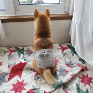 犬の簡単腹巻きの作り方。