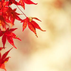 秋らしいファッションをする3つの方法!