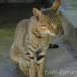 ネパールで出会った可愛いネコちゃんたち 私が猫好きになった日