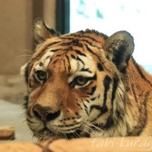 【札幌観光】円山動物園|冬の動物たちの様子を見に行こう★