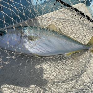 鯛が釣りたい!Part2