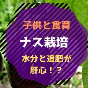 【食育】ナス栽培!ベランダ菜園〜花から実へ
