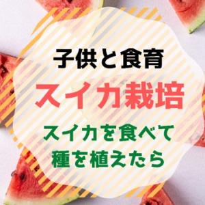 【食育】種からスイカ栽培!?ベランダ菜園
