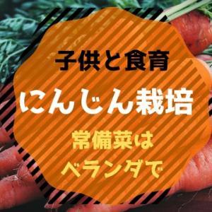 【食育】種から人参栽培!ベランダ菜園