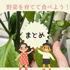 【食育】ベランダ菜園のまとめ記録