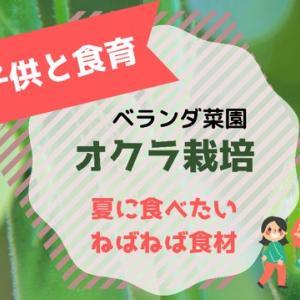 【食育】売れ残りの苗からオクラがなるか!?ベランダ菜園
