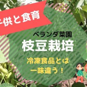 【食育】大豆から枝豆栽培できるのか!?ベランダ菜園