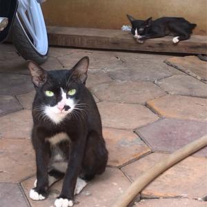 シェムリアップの猫ちゃんとなかなか仲良くなれなくて淋しい