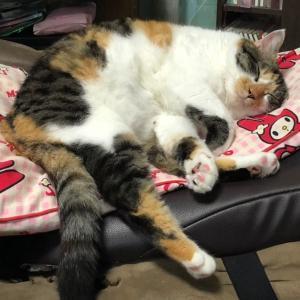 猫の寝相、うちの猫変なんです。