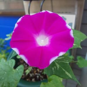 月命日に咲いた花