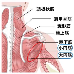 片麻痺の肩関節屈曲を邪魔しがちな筋肉。