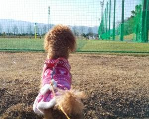 トピックス 犬と一緒に行く橿原市運動公園でのウォーキング