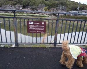 季節の話題 令和2年3月29日(日)犬と一緒に行く 奈良県橿原市耳成山の風景