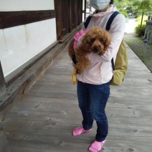 犬と一緒に行ける奈良県高市郡高取町壷阪寺