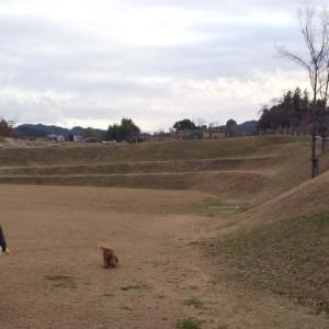犬と一緒に行く世界遺産候補明日香村キトラ古墳周辺地区公園ぶらり旅(散歩編)