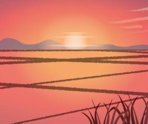 犬と一緒に行く明日香村 紫陽花と夕日に染まる水田の景色