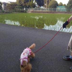 季節の風景 奈良県橿原市、キトラ古墳へ 犬と一緒に水鏡と初夏の花ぶらり旅