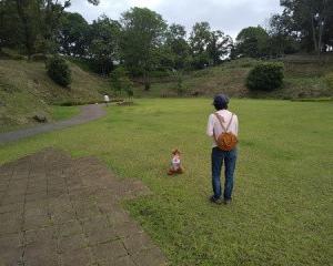 犬と一緒に行く新沢千塚古墳群公園