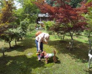 犬と一緒に行く奈良県宇陀市奈良カエデの郷ひららへぶらり旅