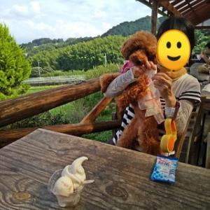 季節の風景 犬と一緒に行く葛城山麓ラッテたかまつのアイスクリーム