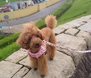 季節の風景 令和2年7月24日奈良県橿原市内犬の散歩!