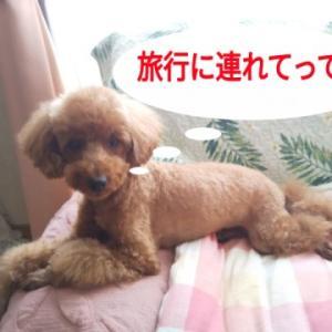 犬と一緒に行くGOTOトラベルの宿探し(滋賀、奈良、和歌山)