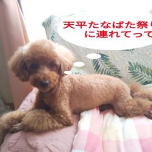 トピックス 予告 夏の夜を愛犬と一緒に行く平城京跡 天平たなばた祭り