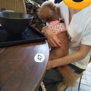 犬と一緒に行く滋賀県甲賀郡信楽町 狸の街と大小屋ランチへのぶらり旅