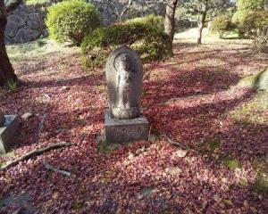 愛犬と行く奈良県御所市九品寺の紅葉など
