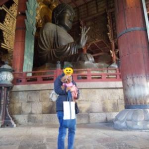 犬と一緒に行く奈良公園、奈良県東大寺、二月堂の旅①