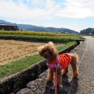 季節の風景 令和3年10月24日(日)愛犬と行く秋本番の奈良県明日香村飛鳥寺周辺