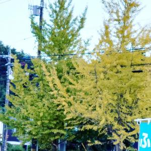 秋っぽい写真