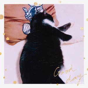 私んちの愛猫