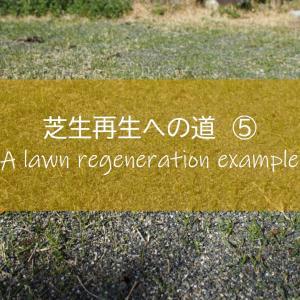 【芝生再生への道#5】コンクリート用の砂を目土に使った結果、芝生は芽吹いたのか!? ~すすむDIY