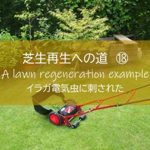 【芝生再生への道#18】芝刈り中に「痛い!」イガラ電気虫に刺された!8月/163日後/芝刈り14回目。 ~すすむDIY