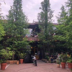 まるで森の中!江南にある隠れ家カフェ♡