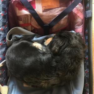 持っていけない...スーツケースから出したもの..クスン ( ノω-、)