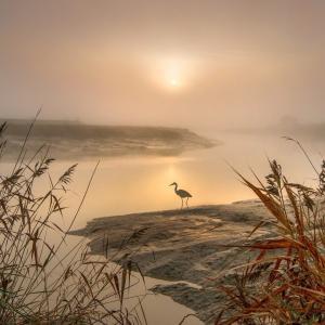 【目覚め】「無理しない」宙意識の基本スタンスの感覚:覚醒エリアで自由という豊かさを具現化創造する