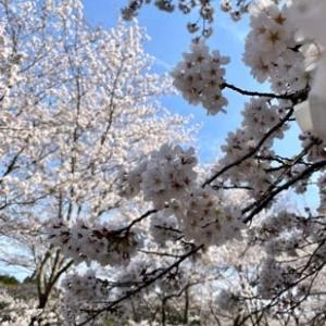 もの寂しい春 。