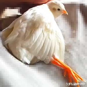 鳥をダメにするナデナデ