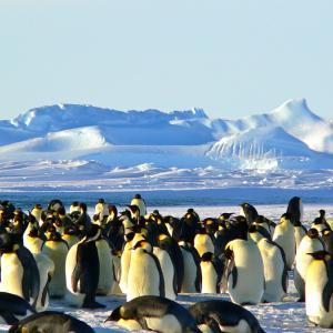 【南極大陸編⑤】これで完璧!南極クルーズ船を選ぶときに見るべきポイント8つ!