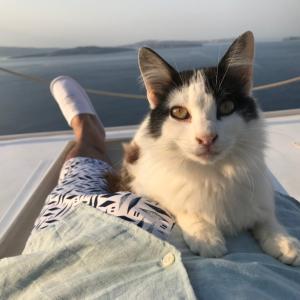 【ギリシャ編⑪】街全体が犬猫セラピーのサントリーニ島イアで癒される