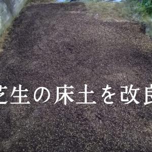 芝生がダメになったので床土を改良してみた。芝生専用の床土の効果は?
