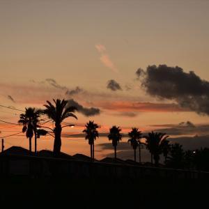 「まぼちょく」の夕暮れ散歩