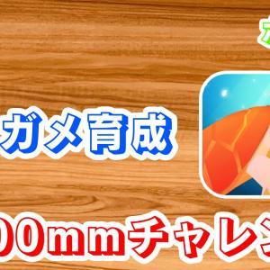 【ポイ活】ウミガメ育成:大きさ1,400mm到達までの時間は?