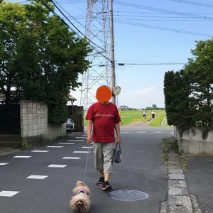 何回散歩に行くんだ・・・・