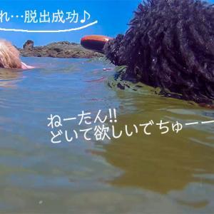 2020夏!!「海水浴編」 水泳⑤あわや衝突